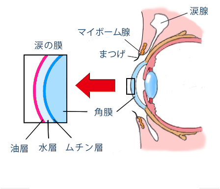 【視力回復】ドライアイをオリーブオイルで解消する