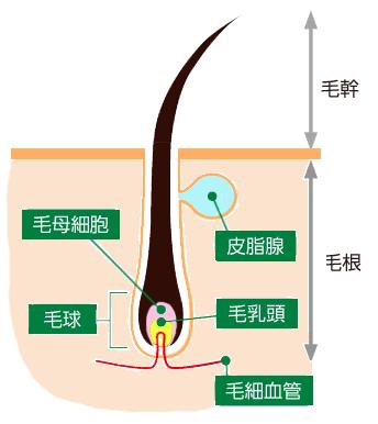 hair-system