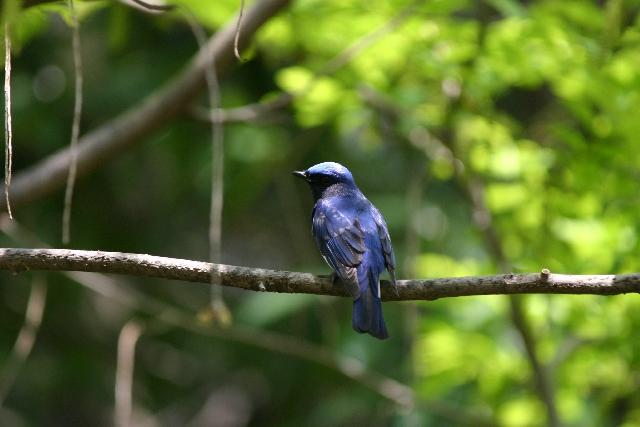 視覚障害・駅でピヨピヨ小鳥が鳴いている・・その鳴き声の正体とは