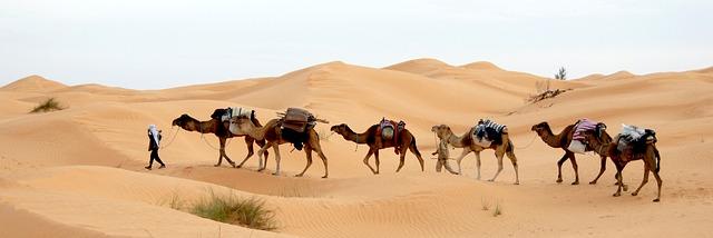 鳥取県のは砂丘|砂漠は日本では唯一東京都にある件について