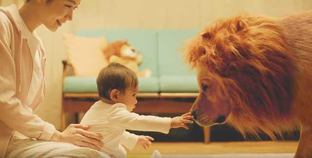 Amazonのライオン犬と赤ちゃんのCMはあの事件が原因で放映中止なのか?